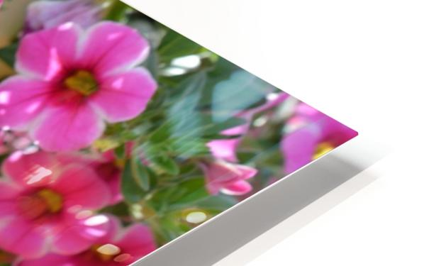Beautiful Pink Flowers Photograph HD Sublimation Metal print