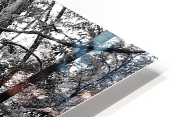 Walkway HD Sublimation Metal print