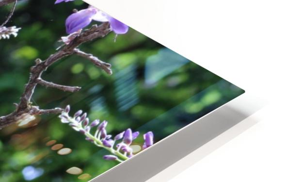 Wisteria HD Sublimation Metal print