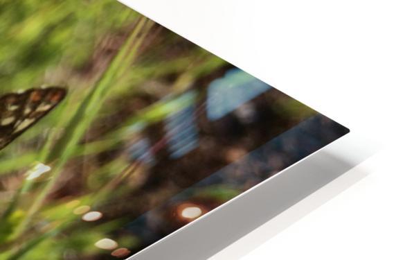 Butterfly on Arrowleaf  HD Sublimation Metal print