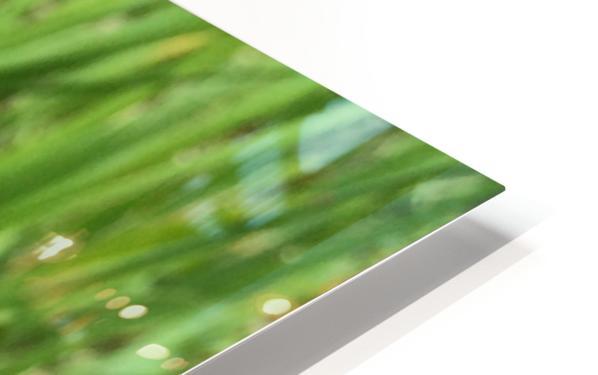 Woodland Star HD Sublimation Metal print