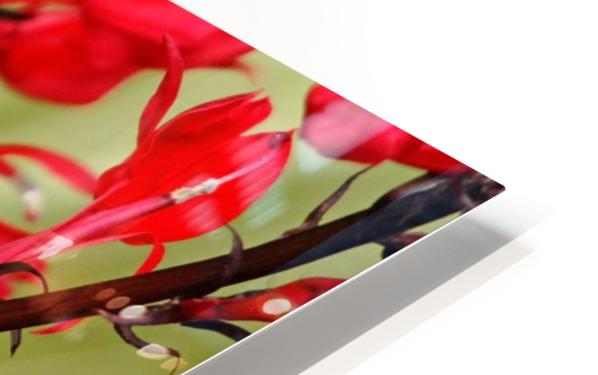 Ruby And Scarlet HD Sublimation Metal print