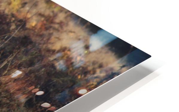 Roosevelt Elk HD Sublimation Metal print