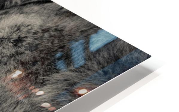 Tenderness HD Sublimation Metal print