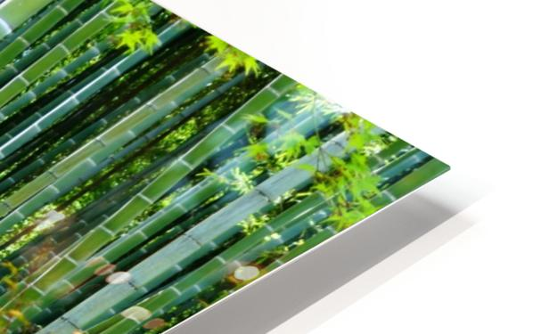 Bamboo Forest HD Sublimation Metal print