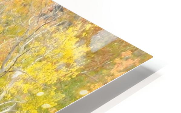Changing Aspens - Vail Colorado HD Sublimation Metal print
