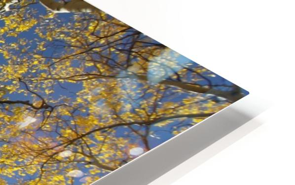 Aspens To Heaven HD Sublimation Metal print