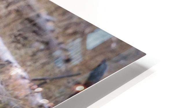 _T8C3739 Modifier HD Sublimation Metal print
