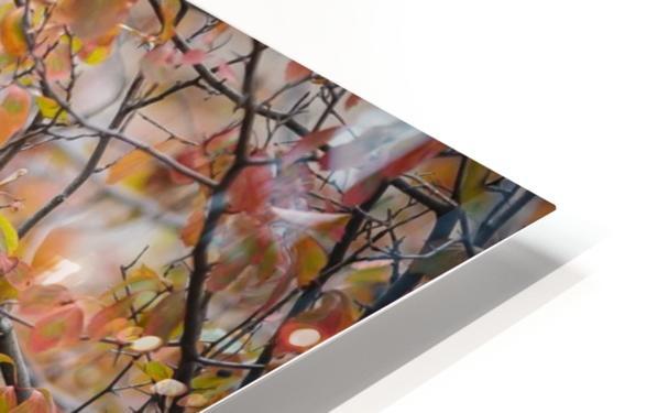 _T8C8285 Modifier 2 HD Sublimation Metal print