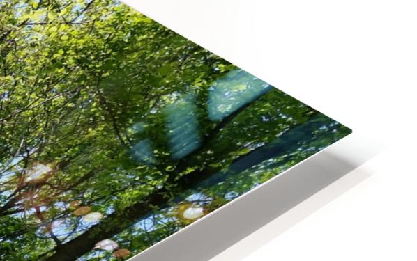 trail HD Sublimation Metal print