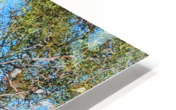 Outback6 HD Sublimation Metal print