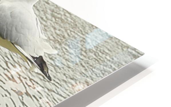 Mouette HD Sublimation Metal print