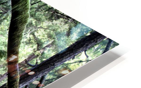 Rainforest Impression de sublimation métal HD