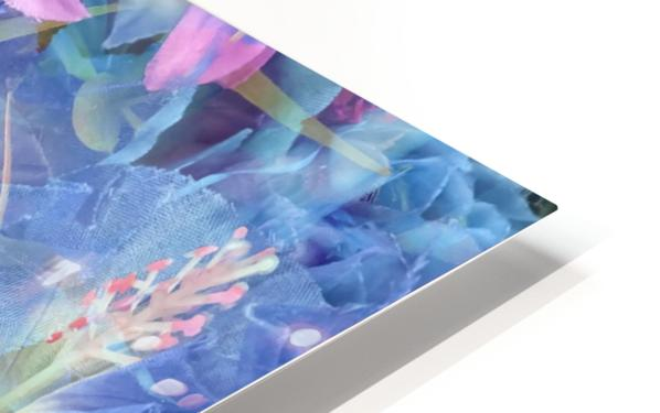 blooming pink and blue daisy flower abstract background HD Sublimation Metal print
