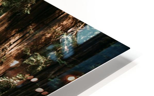 Avenue of the Giants Impression de sublimation métal HD
