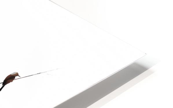 a sabbatical HD Sublimation Metal print
