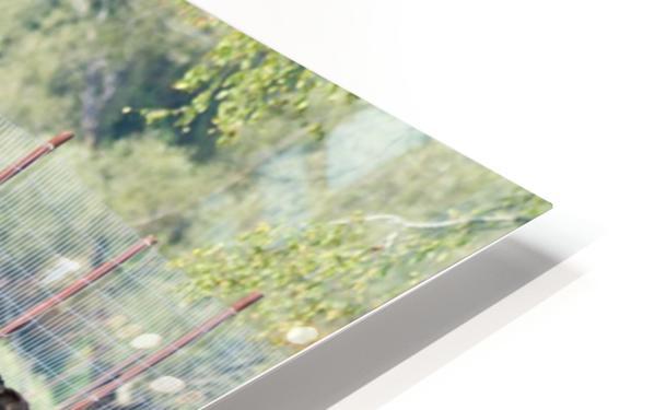 Elk Red Tailed Deer or Wapiti 16 HD Sublimation Metal print