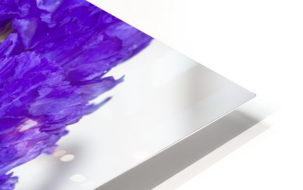 Purple Statice Flower HD Sublimation Metal print