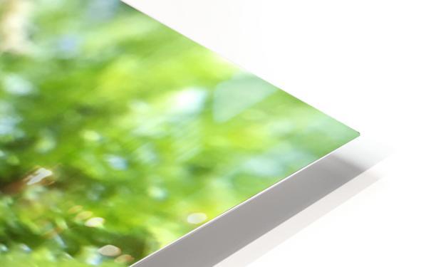 IMG_3563 HD Sublimation Metal print