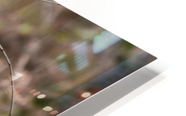 Angry Mockingbird 3 HD Sublimation Metal print