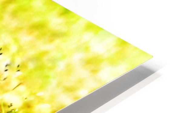 Vivid Robin HD Sublimation Metal print