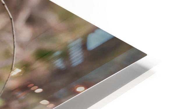 Angry Mockingbird 2 HD Sublimation Metal print