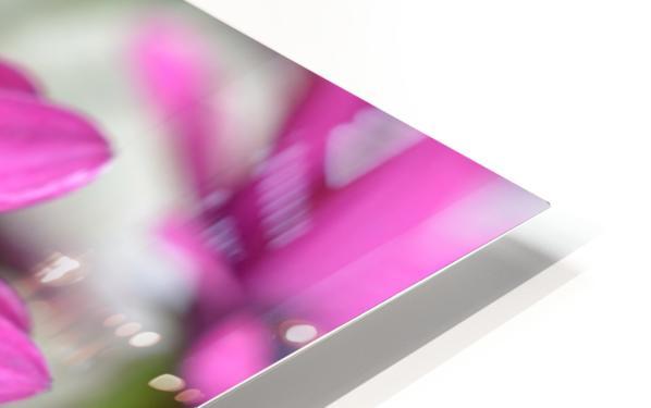 Purple Flower Photograph HD Sublimation Metal print