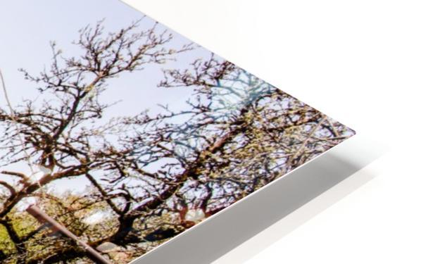 Niedernsill Landscape Austrian Alps HD Sublimation Metal print