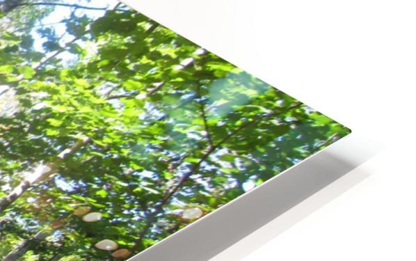 Landscape (176) HD Sublimation Metal print