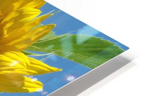 Sunflower HD Sublimation Metal print