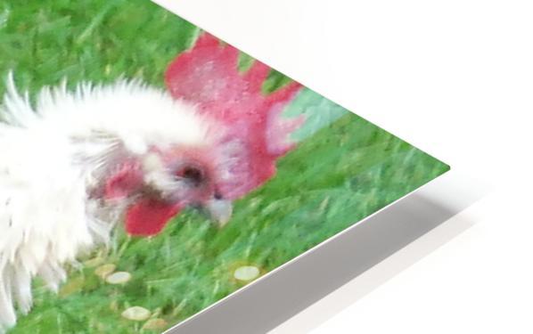 Chicken HD Sublimation Metal print