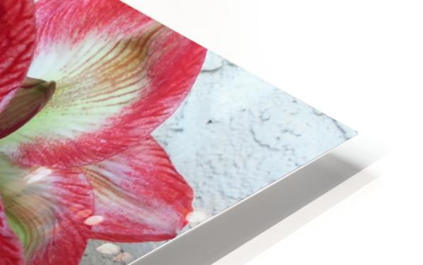 Flower HD Sublimation Metal print
