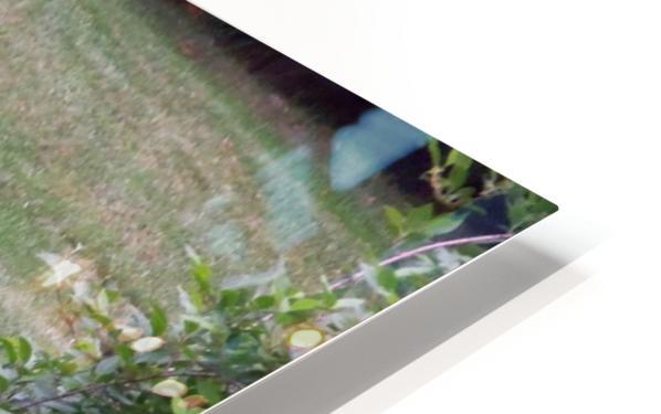 Deer HD Sublimation Metal print