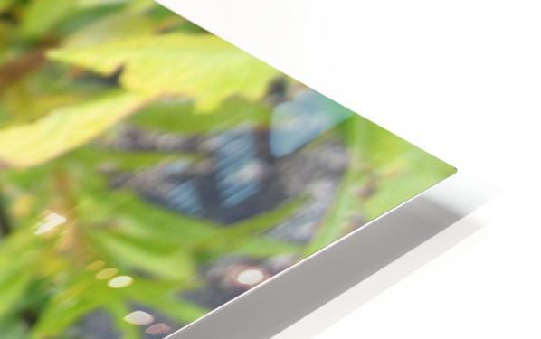 Flower (7) HD Sublimation Metal print