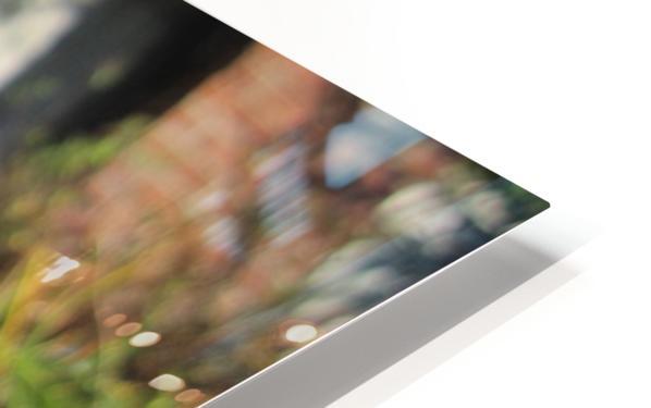 Flower (111) HD Sublimation Metal print