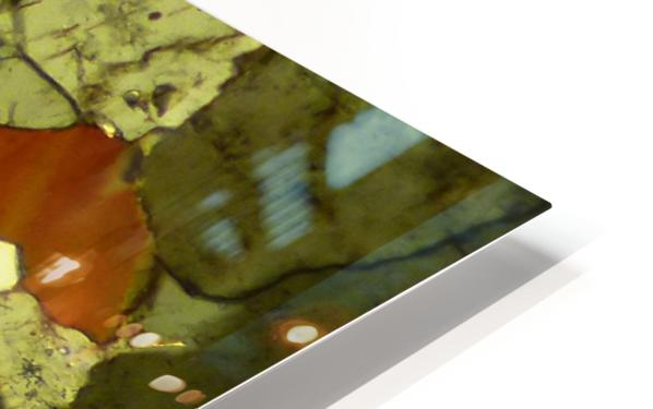 Forest Primeval HD Sublimation Metal print