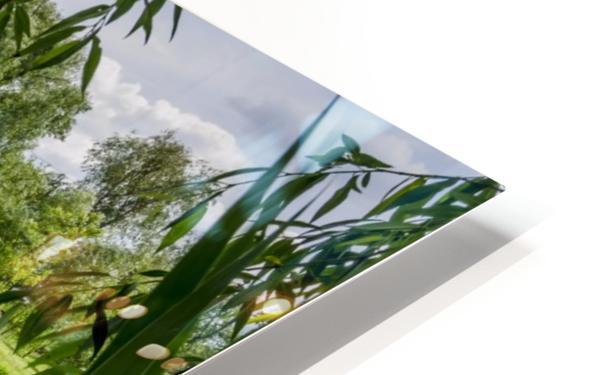 Summer Lake HD Sublimation Metal print