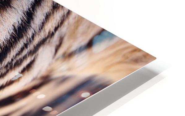 Zebra Eye 1873 HD Sublimation Metal print