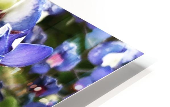 Bluebonnet HD Sublimation Metal print
