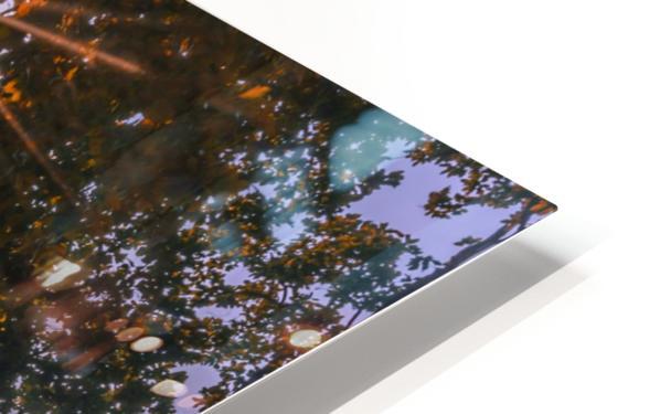DSC_0328 HD Sublimation Metal print
