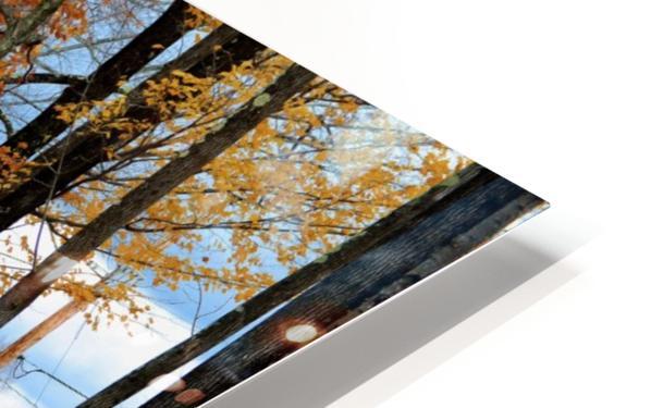 Autumn Three Maple Dr. Manchester VT HD Sublimation Metal print