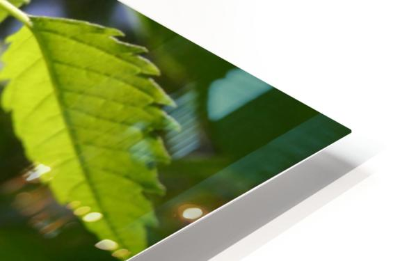 leaf with light HD Sublimation Metal print