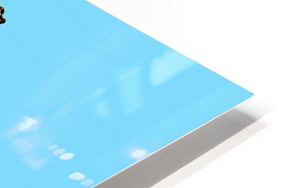 Laughing Galah - Blue HD Sublimation Metal print