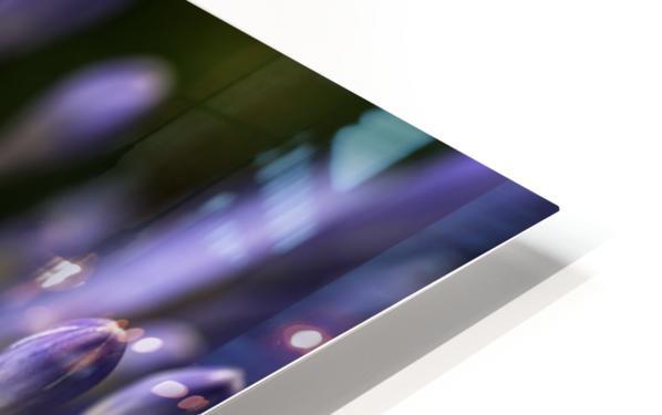 Agapanthus Blue HD Sublimation Metal print