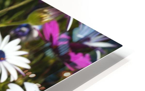 Daisies Of White And Pink HD Sublimation Metal print