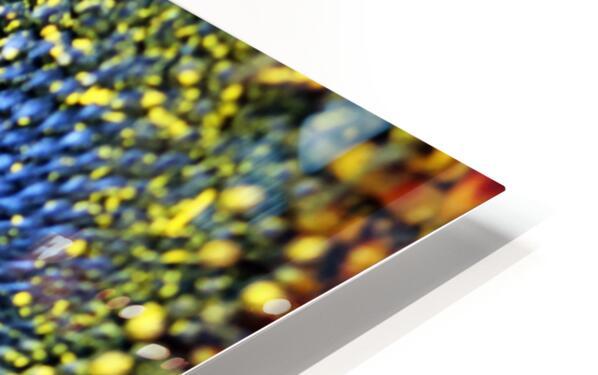 Spiral Center Of Sunflower HD Sublimation Metal print