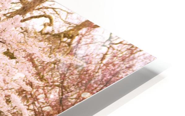 Blossom Tree HD Sublimation Metal print