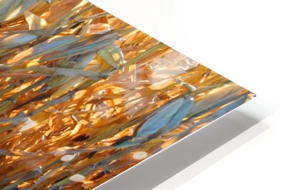 Cornstalk Shadows HD Sublimation Metal print