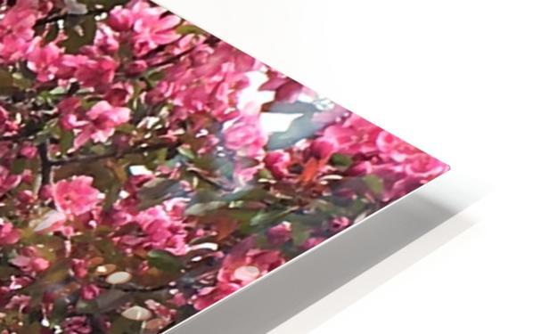 Flowering Tree HD Sublimation Metal print