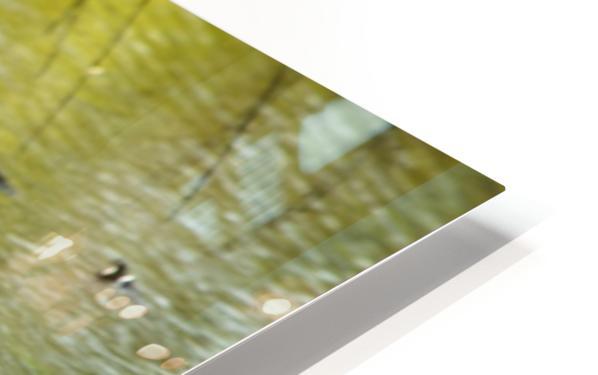 Cygnets HD Sublimation Metal print